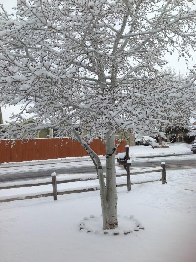 Snow 2-29