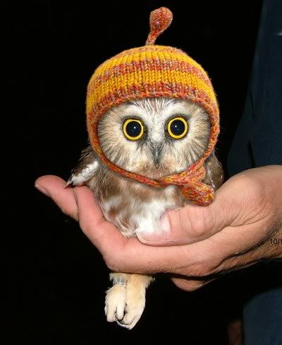 owl-in-a-hat